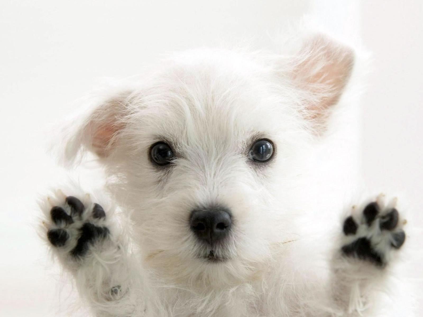 cute-dog-2014-08-22